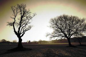 two trees by awjay