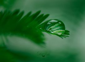 Heaven of Green by Davils-Photography