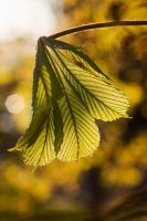 .leaf1. by zeenon