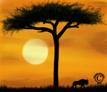 Kenya Sunrise by Esevans