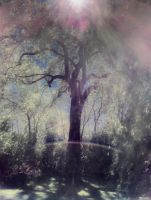 Rainbow Tree by intao