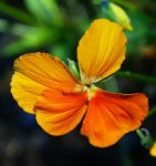 Flowers - ns 03 by Aimelle-Stock