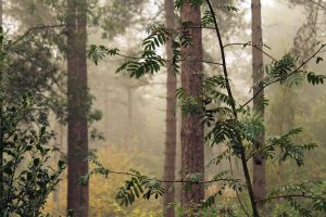 Forest and mist by Jhickling