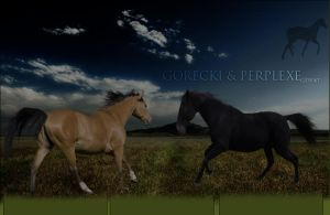 Gorecki and Perplexe by oceancoralgraphics
