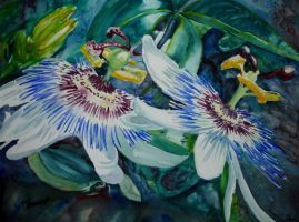 Two Passion Flowers by p-e-a-k