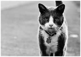 M272 :: Britches by mr-MINTJAM