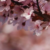 blossom of bliss by christinegeier