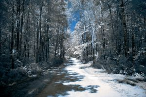 -Road of Infrared- by Materialize127