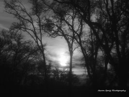 Monotone Darker Lighting Sunset by aaron-sprig