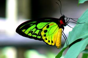butterfly2 by James-Fong