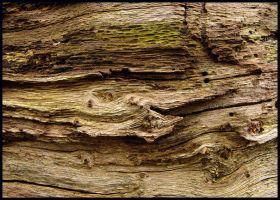 Late tree-trunk structures by jchanders