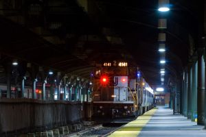 Endangered Species by sullivan1985