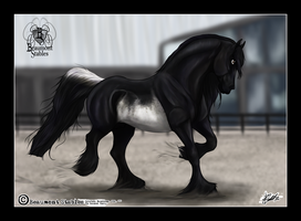 Blackie - Inspection - OVEC by Baringa-of-the-Wind