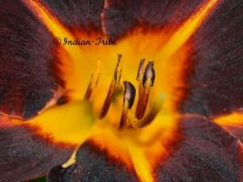 Vegetal flame... by Indian-Tribe