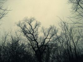 Naked Trees 2 by KatVonB
