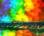 Rainbow Connection by VisualPoems