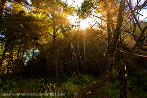 Sun Breaking Through the Trees by TalesFromTheForest