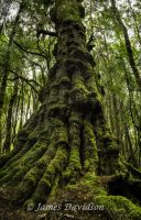 Treebeard? Is that you? by slayer-of-moments