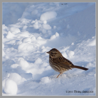 Lil Sparrow in Snow by Mogrianne