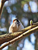 Spring sparrow. by COREnick
