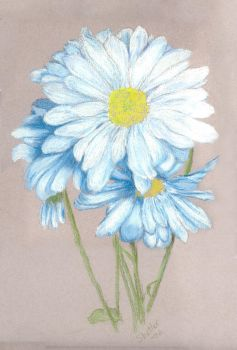 Kaysie's Daisies by kathysgallery