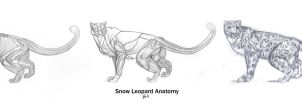 Animal Anatomy: Snow Leopard by 89ravenclaw