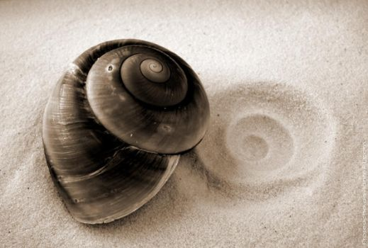 Shell and Imprint by Proseuche