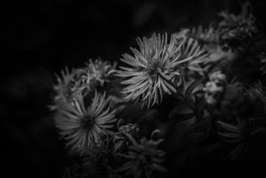..: October - III - BW :.. by Mademoiselle-P
