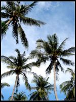 coconut trees by yourpeachy
