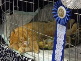 Cat Show 4 by Champineography