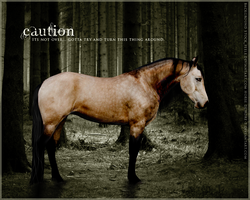 Caution by Subaru09