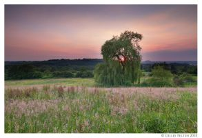 Weeping Willow Sunset by Swordtemper