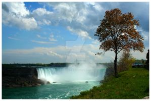 A tree by the falls by Ledabo