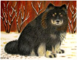 Finnish Lapphund by Elkenar