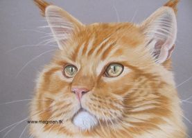 Siem! Red cat in pastel by mo62