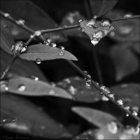 After Rain II by anna-earwen