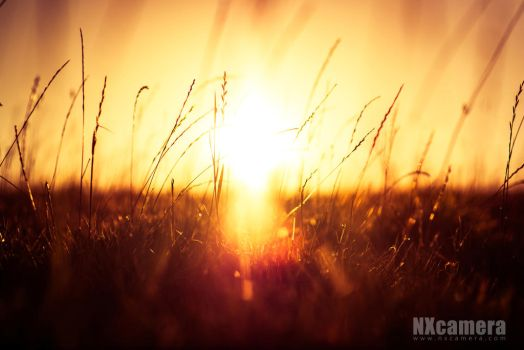 Autumnal Sunset by NXcamera