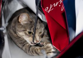 Cat in a bag 2 :) by MaliskaRodgers