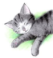 Sleeping Cat by don234a
