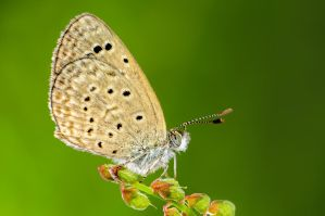 Butterfly by Hussain-AlMousa
