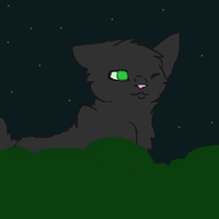 Hollyleaf by Thunder-Neko