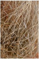 grasses after rain 2 by pathworking