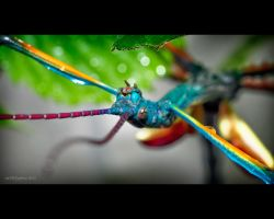 turquoise-coloured Stick-Insect by SmartyPhoto