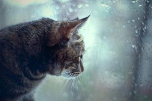 Cat and Rain by AnnaZe