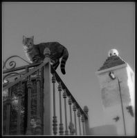 Cat on a hot tin roof... by quevedo3