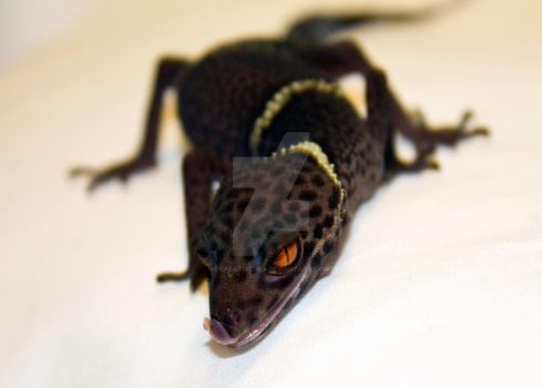 Chinese Cave Gecko - 3 by creative1978