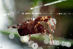Bling Bling Spider by thrumyeye