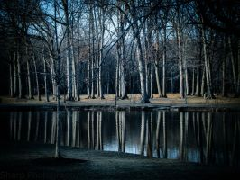 Natural Reflections by SharpPhotoStudio