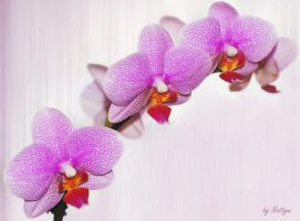 Purple orchid by Nattyw