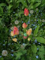Tulips and forget-me-nots by Mecarion